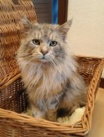 fundkater_53332