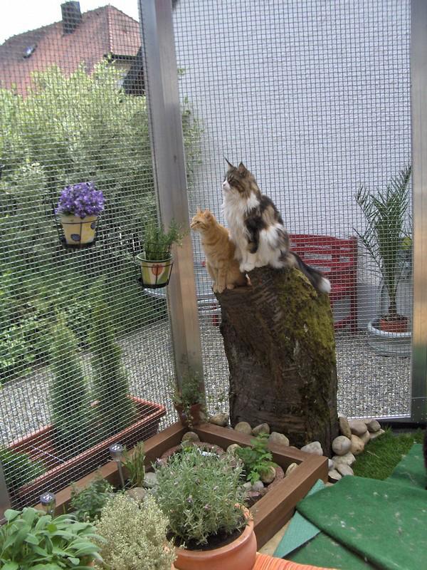 Katzensicherer Garten